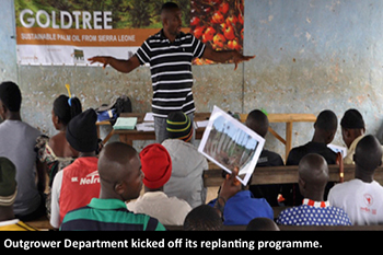 Goldtree-foundation--Outgrower-Department-replanting-programme.